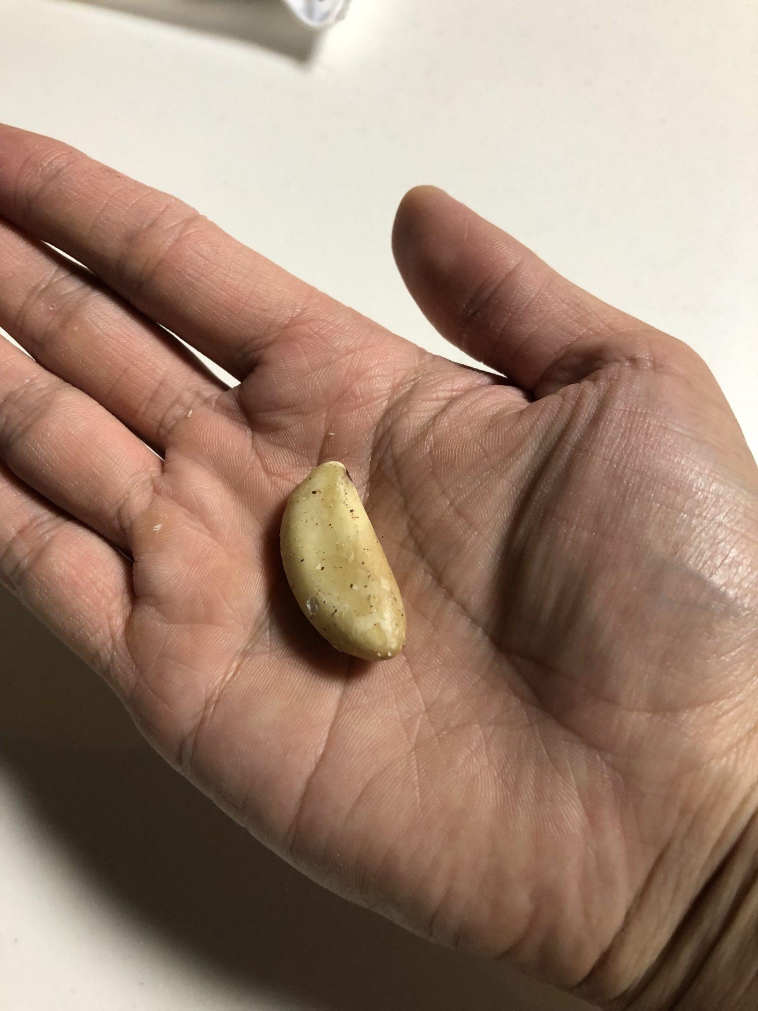 ブラジルナッツ