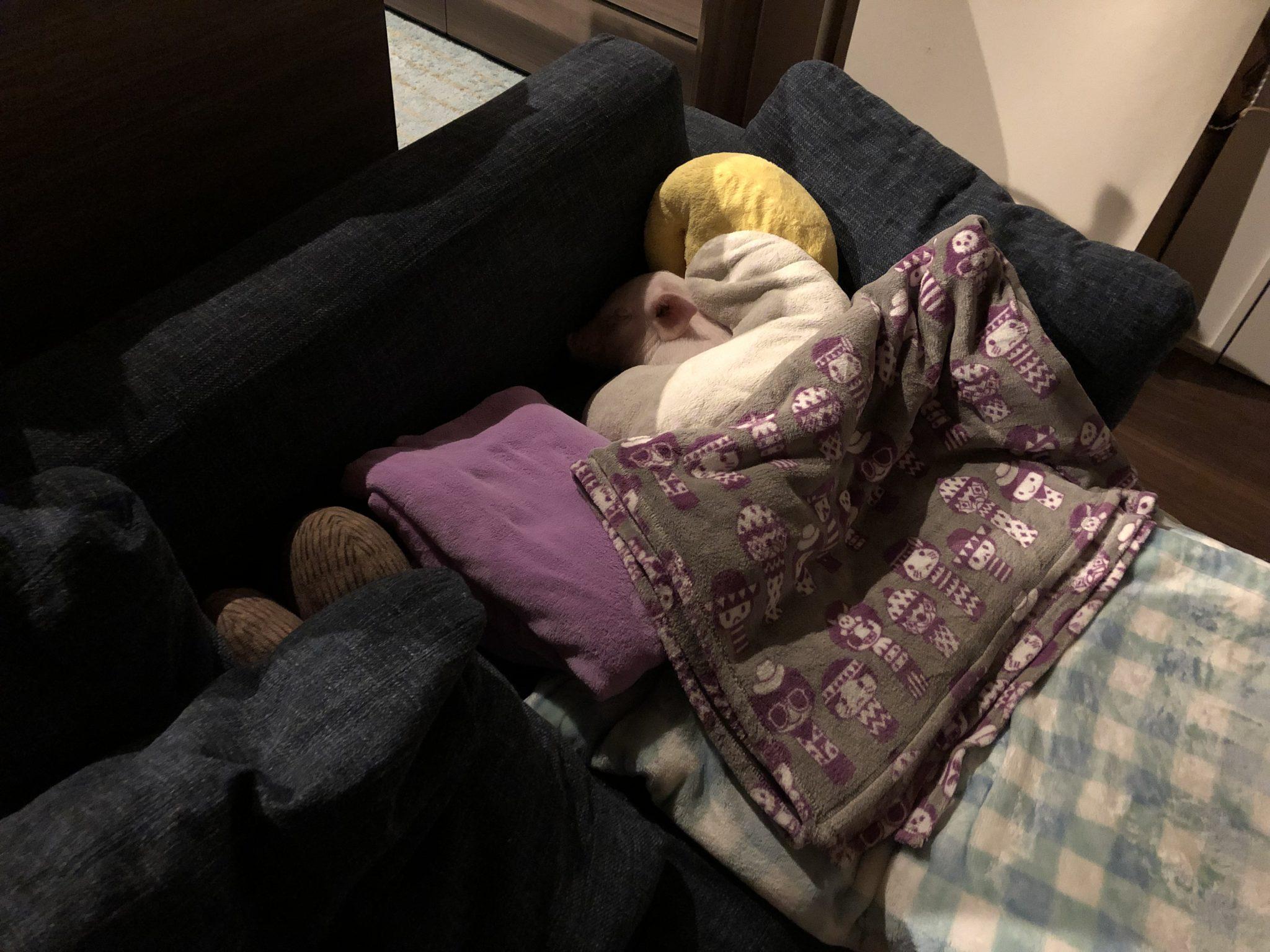 夜寝る場所