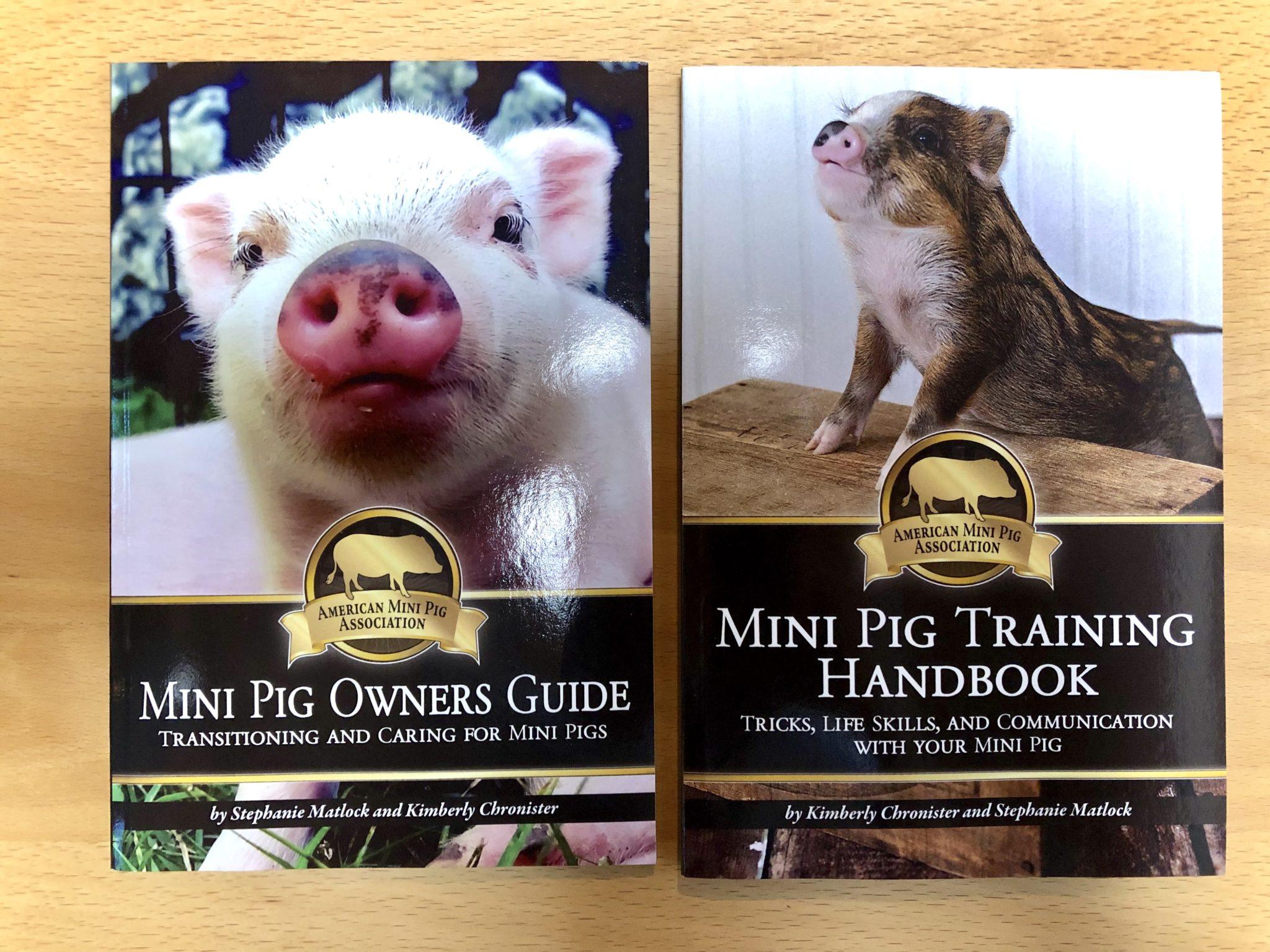 american mini pig association