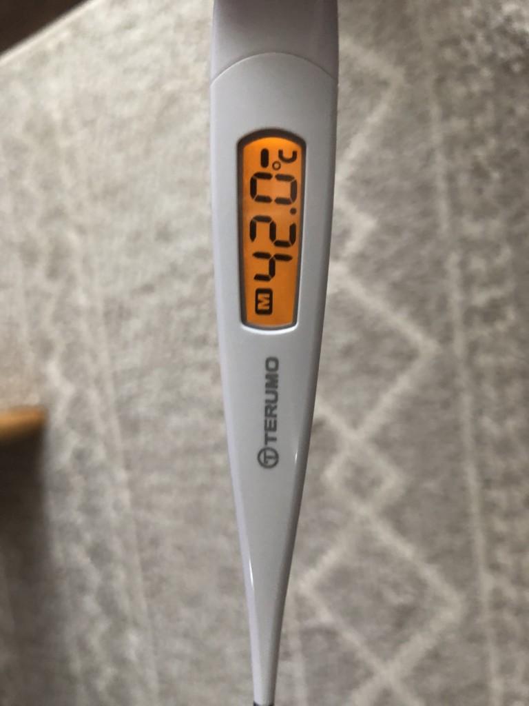 ブタの体温測定